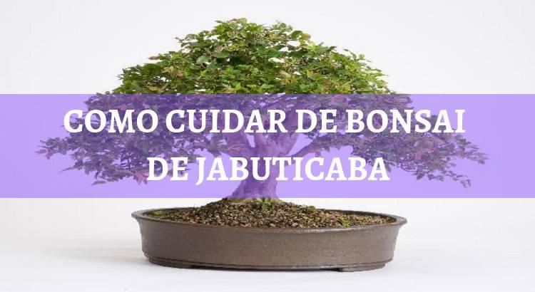 Bonsai De Jabuticaba O Passo A Passo Para Ter Frutas Lindas